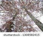 deciduous trees in winter in... | Shutterstock . vector #1308582415
