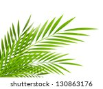Summer Background With Palm...