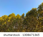 deciduous trees on the... | Shutterstock . vector #1308671365