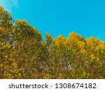 deciduous trees on the... | Shutterstock . vector #1308674182