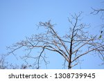 autumn deciduous trees with... | Shutterstock . vector #1308739945