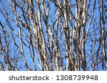 autumn deciduous trees with... | Shutterstock . vector #1308739948