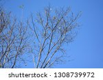 autumn deciduous trees with... | Shutterstock . vector #1308739972