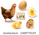chicken life cycle stages... | Shutterstock .eps vector #1308770155