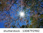 midday sunbeams with blue sky... | Shutterstock . vector #1308792982