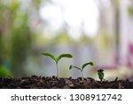 small tree sapling plants...   Shutterstock . vector #1308912742