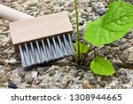 weeds cleaning with weed brush  | Shutterstock . vector #1308944665