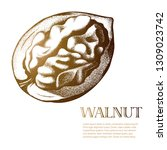 half peeled walnut colorful... | Shutterstock .eps vector #1309023742