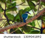 the birds  collared kingfisher  ... | Shutterstock . vector #1309041892