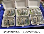 raw mackerel on the market  at...   Shutterstock . vector #1309049572