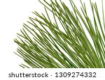 pine tree branch isolated on... | Shutterstock . vector #1309274332