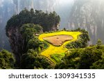 spectacular rice terrace ... | Shutterstock . vector #1309341535