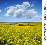 Rapeseed Field In The Afternoo...