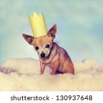 Stock photo a cute chihuahua on a blanket with a crown on 130937648