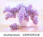 lilacs syringa of bouquet in... | Shutterstock . vector #1309439218