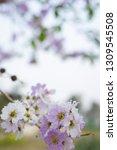beautiful flowers in thailand.... | Shutterstock . vector #1309545508
