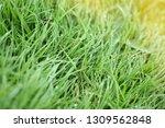 freshness water dew drop on...   Shutterstock . vector #1309562848