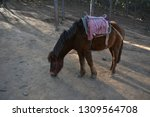 little china horse for tourist... | Shutterstock . vector #1309564708