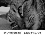 black and white photography of...   Shutterstock . vector #1309591705