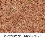 fluffy wet brown horse winter... | Shutterstock . vector #1309664128