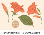 tropical flowers  hibiscus ... | Shutterstock .eps vector #1309698895