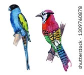 watercolor exotic birds... | Shutterstock . vector #1309760878
