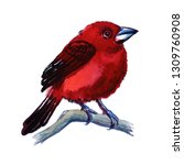 crimson basked tanager... | Shutterstock . vector #1309760908