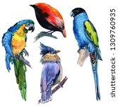 watercolor exotic birds... | Shutterstock . vector #1309760935