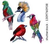 watercolor exotic birds... | Shutterstock . vector #1309760938