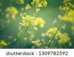 soft focus close up of yellow... | Shutterstock . vector #1309782592