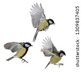 great tits in flight isolated... | Shutterstock . vector #1309837405