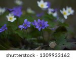 the group of the first spring... | Shutterstock . vector #1309933162