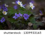 the group of the first spring... | Shutterstock . vector #1309933165