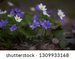 the group of the first spring... | Shutterstock . vector #1309933168