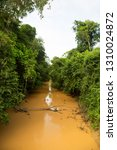 typical rain forest river...   Shutterstock . vector #1310024872