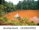 typical rain forest river...   Shutterstock . vector #1310024902