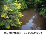typical rain forest river...   Shutterstock . vector #1310024905