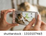 woman take a picture of a... | Shutterstock . vector #1310107465