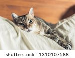 lazy and funny tabby cat stay... | Shutterstock . vector #1310107588
