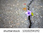 trees and flower are born and... | Shutterstock . vector #1310254192
