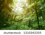 tree canopy in tropical jungle  | Shutterstock . vector #1310342335
