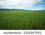 beautiful spring landscape with ...   Shutterstock . vector #1310367952
