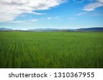 beautiful spring landscape with ...   Shutterstock . vector #1310367955