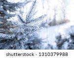 detail of winter frozen pine... | Shutterstock . vector #1310379988
