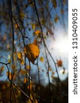 bare trees growing in autumn... | Shutterstock . vector #1310409055