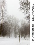 winter forest with bare... | Shutterstock . vector #1310409082