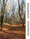 bare trees growing in autumn... | Shutterstock . vector #1310409328