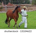 peruvian paso horse...   Shutterstock . vector #13104622