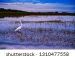 Bird Standing In Wetlands Over...