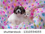 Stock photo puppy kitten on balloon background 1310554055